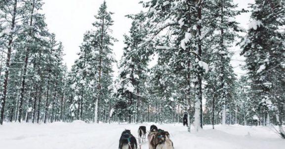 Finlandia huskies errores viajero turismo irresponsable faada @viajareslou