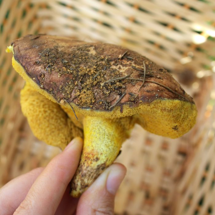 mushrooms and hiking at granada