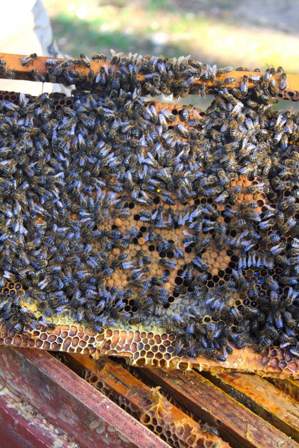 apicultura en viajar eslou