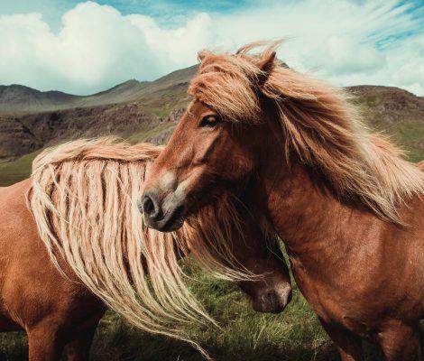 montar a caballo en Lanzahita